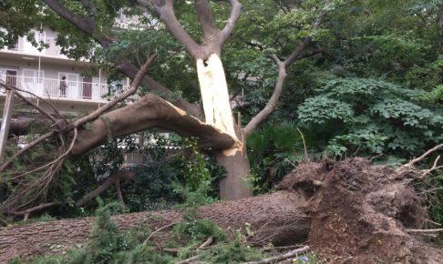 8/24の台風20号の西宮市の被害をまとめてみた